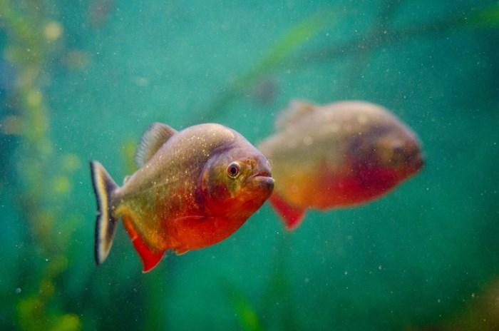 Cá tươi dù đã chết vẫn tốt hơn đông lạnh? - Ảnh 10