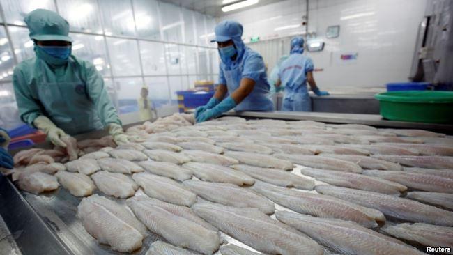 Công nhân của một nhà máy hải sản ở thành phố Cần Thơ.