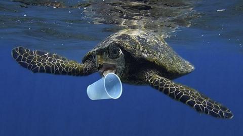 EU muốn loại bỏ sản phẩm nhựa dùng một lần - ảnh 1