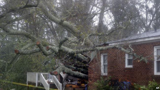Cây đổ vào một ngôi nhà ở thành phố Wilmington.
