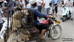Chó được vận chuyển tới nơi giết mổ.