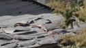 'Vây cá mập' làm lộ tiêu cực ngoại giao
