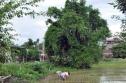 Chuyện kỳ dị ở nấm mộ hoang 'tự lớn lên' giữa Hà Nội