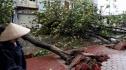 Việt Nam: Bão Sơn Tinh gây thiệt hại lớn