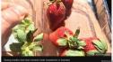 Phát hiện kim khâu trong dâu tây của Úc