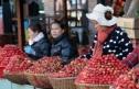 Úc bắt một phụ nữ gốc Việt trong vụ 'dâu tây chứa kim khâu'
