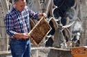 Lo lắng cho 180.000 con ong trên mái Nhà thờ Đức Bà